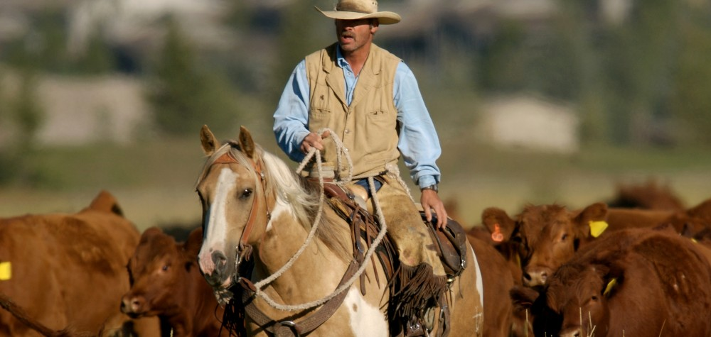 Image result for COWBOYS AND RANCHES